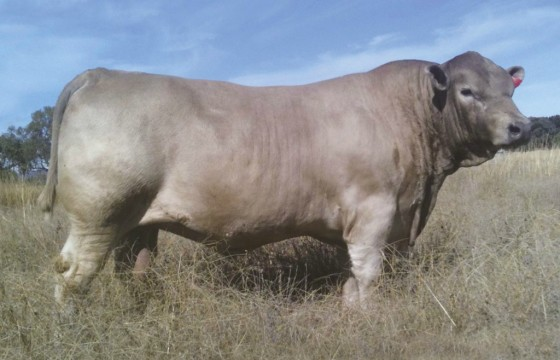 Wallawong Underbelly LEJ F9 sold $9000 2012